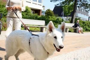 St. Peter-Ording Hotel Hund